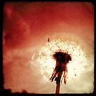 The Red Dandelion by Marc Loret