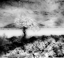 Snow Tree - Glencoe - Scotland by TonySkerl Photography.com