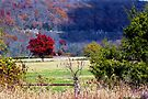 Cloud Shadows, and Ozark Autumn Colors by NatureGreeting Cards ©ccwri