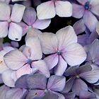 Pastel Petals by Natalie Ord