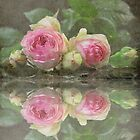 Reflections of  Pink Roses by julie anne  grattan