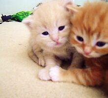 Hugging Kittens by Bronwyn Day
