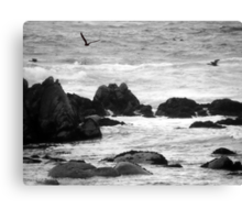 swim in the breeze off the rocky shore Canvas Print