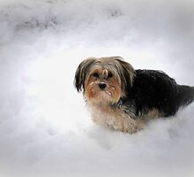 Bayle (Fizzle) Roming In The Snow by Linda Miller Gesualdo
