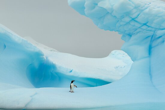 All alone in the ice by David Burren