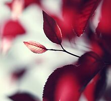 A touch of red. by Beata  Czyzowska Young