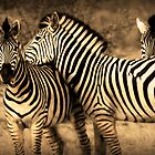 Lines of Botswana by Skyjuggler
