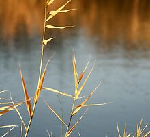 Canal grasses close up  by Paul Pasco