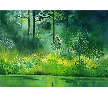 Light n Greens Photographic Print