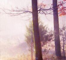 Morning Glow by NatureGreeting Cards ©ccwri
