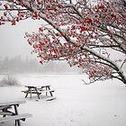December 26 Blizzard, 2010  by Poete100