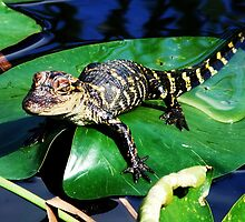 Gator on a Lily Pad by leighroy