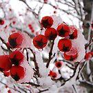 Iced berries by Poete100