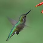 For me New Year means....a lot of hummingbirds by Meeli Sonn