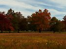 "Fall Foliage at Waveny by Christine ""Xine"" Segalas"