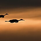 Sunset Silhouette by rjcolby