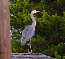 Neighbor by Gail Bridger