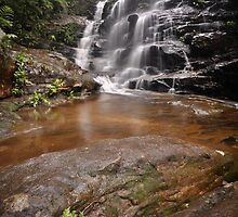 Sylvia falls Fern by STEPHEN GEORGIOU