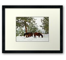 Bay Horse Bookends Framed Print