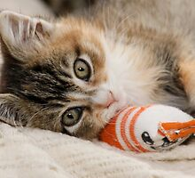 Mallory and her Toy Sock by Kimberly Palmer
