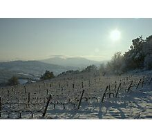 Snowy Vineyard Photographic Print