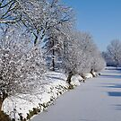 Trees under snow by Willem Hoekstra
