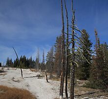 Yellowstone National Park - Mountain Slope by Frank Romeo