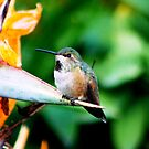 Baby Hummingbird by Meeli Sonn