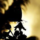 Butterfly Silhoutte by Aaron Baker