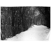 Winter's Trail Poster