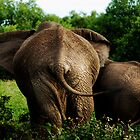 Elephant with baby. by Amyn Nasser