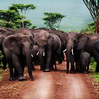 Family of Elephants in Nogorngoro. by Amyn Nasser