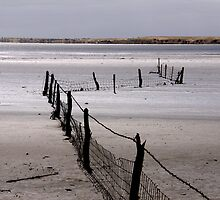 Lake Fowler Fence by pablosvista2