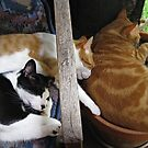 My Feline Family - Together? by Neil Ross