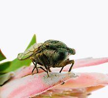 Cicada by elsha