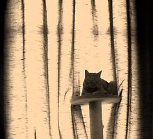 ginger cat on cat tree by rkdownton