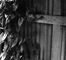 natures reclaiming the shed by marimba