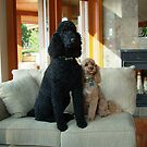 Samantha & Benji by AnnDixon