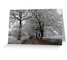 Frosty oak tree lane Greeting Card