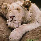 Snooze Time by Alexa Pereira