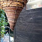 139 - COBWEB IN OUR GARDEN - 02 (D.E. 2009) by BLYTHPHOTO