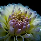 Dahlia I by TheWalkerTouch