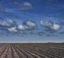 Texas Field Furrows 0046 by Randall Nyhof