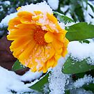 Little Snow Flower by ShutterlyPrfct