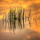 Reeds at Sunset - Dog Rocks by Hans Kawitzki