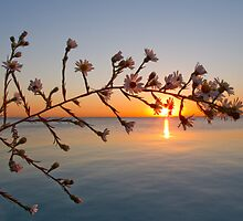 Flowers against the dawn by BeardyGit