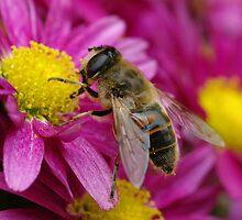 Honey bee by Willem Hoekstra