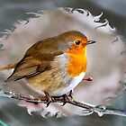 Robin by hary60
