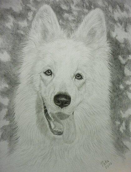 White Swiss Shepherd by Istvan froghunter