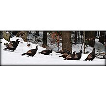 Winter Turkey Parade Photographic Print